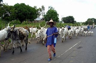 How Fulani Cattle Rearers Raped Woman To Death