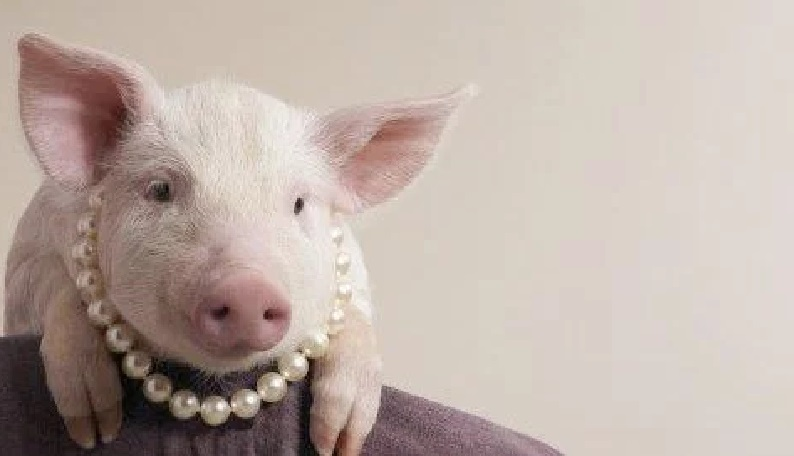 OPINION: Of pigs and pearls…A MUST READ
