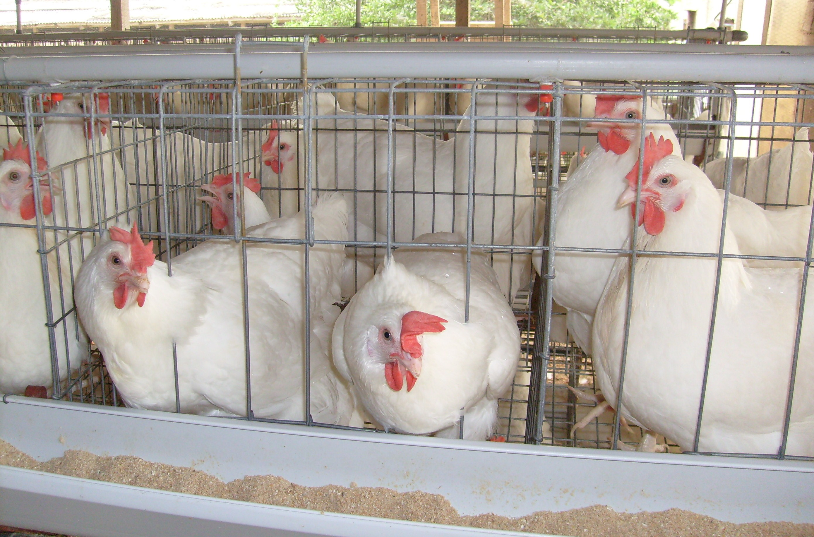 Tuns Farms Renew Commitment To Osun Broilers Out-Growers Production Scheme
