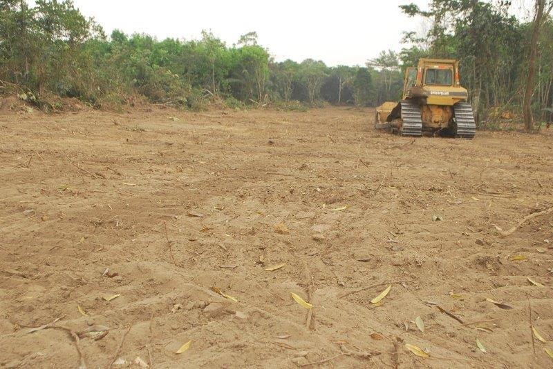 Nigeria To Lose Its United Nations REDD+ Status Over Cross River Super Highway