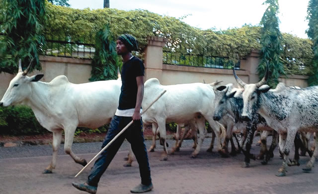 Herdsmen Kill Farmer in Ogun State
