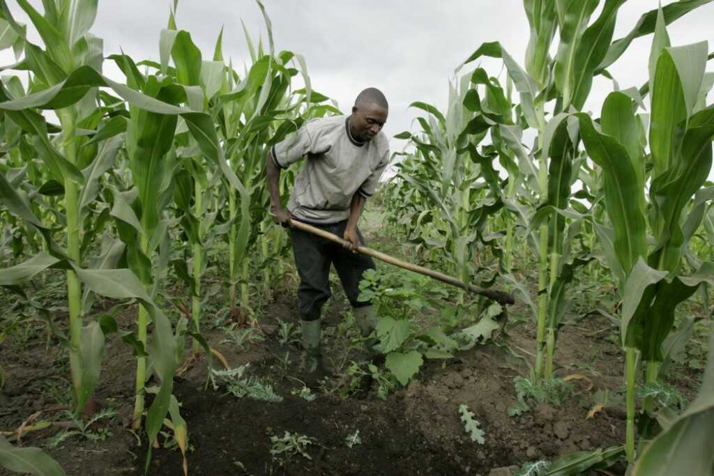 Nigeria to be Self-sufficient in Rice Production by 2018