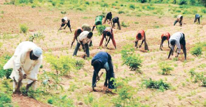 Rice Farmers Urged To Increase Productivity
