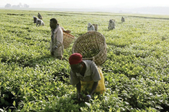 Edo Farmers To Cultivate 250,000 Hectares Of Land In Two Years – Obaseki