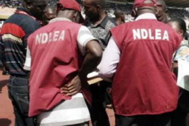 NDLEA Destroys 60.5 Hectares Of Cannabis Farm, Arrests Two Suspects In Osun