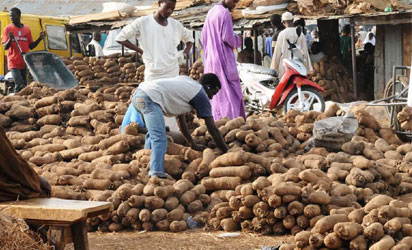 Yam In Nigeria Is Far Better In Taste, Quality – Exporter