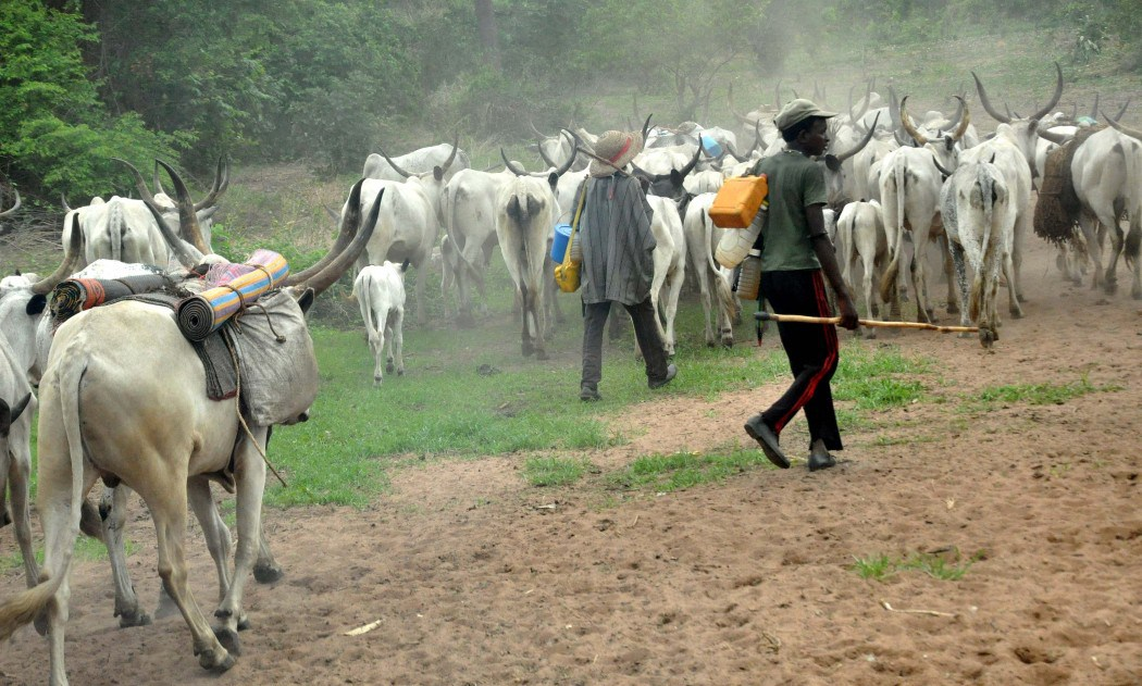 Herdsmen Destroy Crops Worth Millions In Anambra
