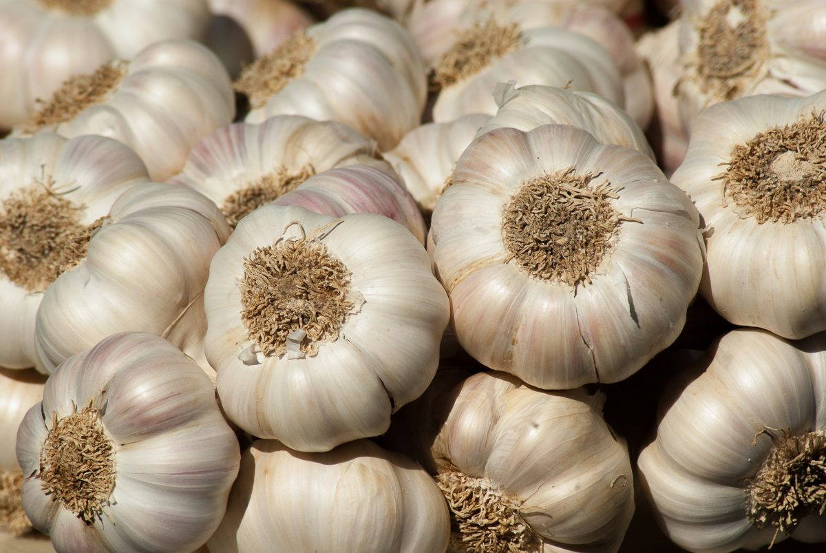 Tackling Health Issues With Garlic (Ayuu)