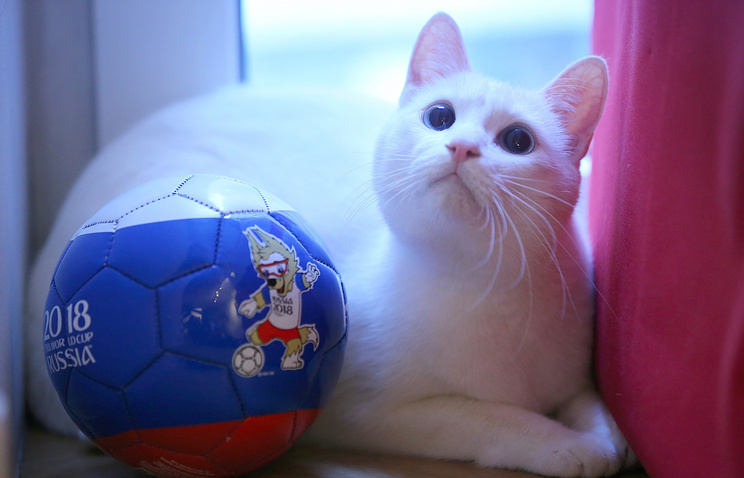 Russia To Star Deaf Cat As World Cup Oracle