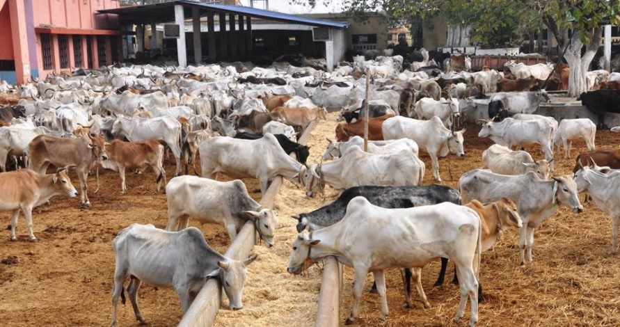 Anambra to Key into FG Proposed Livestock Production Project
